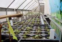 Garden News / by The Botanical Garden of the Ozarks