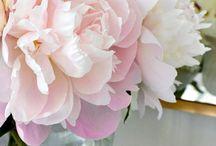 des fleurs des fleurs!