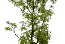 Trees & Bushes