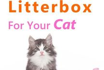Cat Litter & Litterboxes / How to choose the right litter, litterboxes and more. Litterbox avoidance problems and general care of that end of business...
