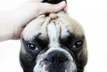 dog stuff / by crankbunny