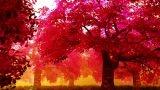 Sakura | 桜と春