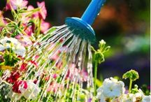 Gardening & Outdoors / by Melinda