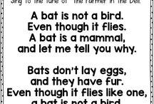 Bats and mammals