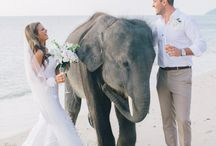 Weddings in Thailand ❤ / Inspirations for your wedding in beautiful Thailand. <3