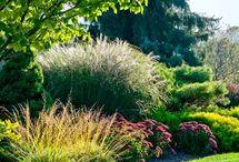 Okrasná zahrada - Ornamental garden