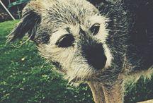 Cute dogs / Cute asf