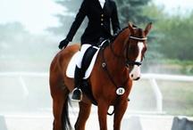 Horses / by Jen Schultz
