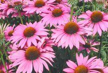 Szép, érdekes Zöldség, Gyümölcs és növény, gomba képek, fotók, rajzok. / Olyan gyümölcsök, zöldségek képei, fotói, amik a www.tobbmintegeszseg.com webáruházban is kint vannak. Közös jellemző: a minősége jó a képeknek, vagy .png, azaz háttér nélküli körbevágott növény.