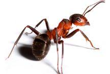 prostředky proti hmyzu