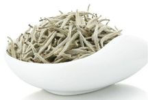 White Tea / For all lovers of white tea and Mighty Leaf. / by Mighty Leaf
