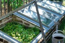 การทำที่ปลูกผัก