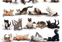 Gatos e outros animais