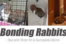 Animales: Cuidados, Consejos, Compras y más