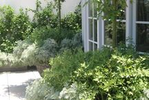 Garden - White