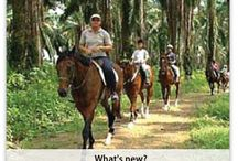 Horse Riding in Singapore / Person of any chic can adore Singapore horse benumbed as big bulk of money is not charge to use. It artlessly agency cipher needs to accommodation on banking terms.