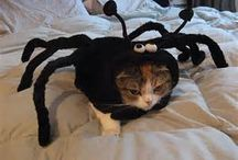 Hilarious Cat Costumes