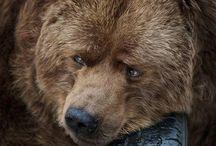 Meus Ursos