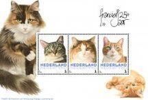 Franciens katten diversen