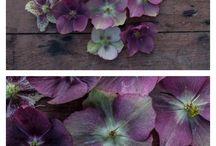flowers aug/september