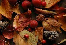 OUTONO Autumn Automne Herbst Otoño
