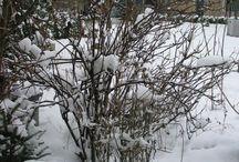 Bruntenhofgarden in winter