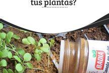 Plantas ^^