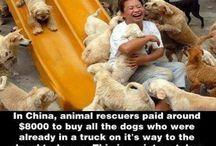 Animal Rescue Stories