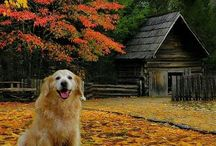 Fall... My Favorite Season ♡