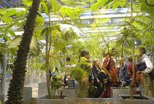 Biodiversité urbaine : pédagogie et implication citoyenne / Nombreuses ressources : outils pédagogiques, retours d'expériences, fiches activités, formations...