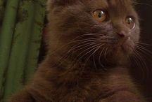 Anak kucing