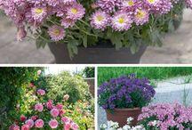 Gardening small pots