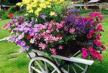Chataření a zahrada