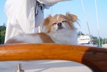 Sailing Canine