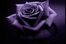 Lavender/Purple / by Susan Johnson