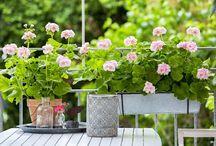 balcone e giardino