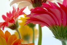 Flowers and gardening / by Aislinn Mikami