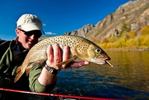LENOK TROUT / Fly fishing for lenok trout.  Lenok trout on the fly.