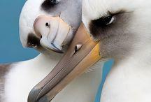 gyönyörű képek a madarak világából