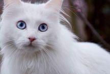 Cats#Животные
