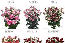 nazwy kwiatow cie tych