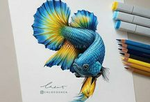 pencil color drawing