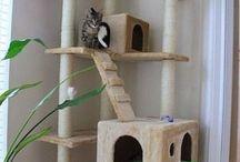 gatos.  persas