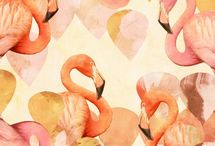 Flamingos / by Betty Beem