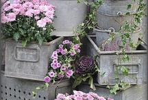 Puutarha, kukkaset..