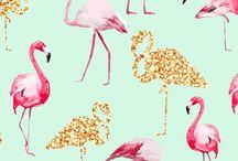 Flamingó Háttérkép