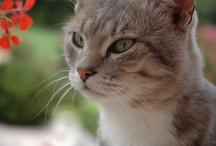Beautiful Pets & Animals