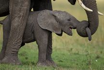 Baby Elephants / by Geoffrey Day