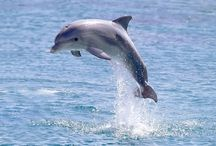 Dolphin / Dolphin House & Dolphin Show In Hurghada , Swim with dolphin in hurghada Egypt