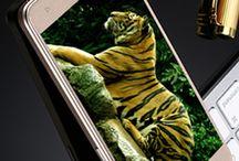 ChampOne Communications India Pvt Ltd. / SmartPhone